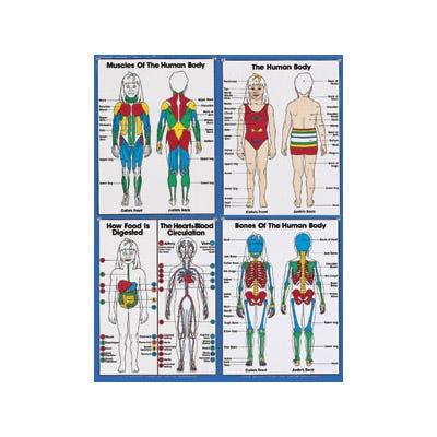 Primary Anatomy Series Charts