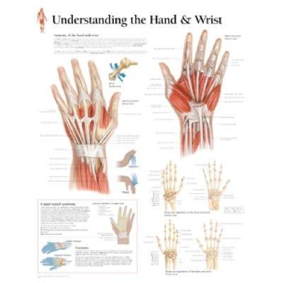 "Anatomical Chart 22"" x 28"" - Hand and Wrist"