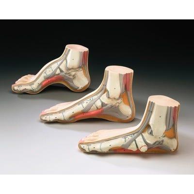 Model Foot Set