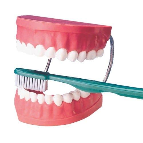 Tooth Brushing Model